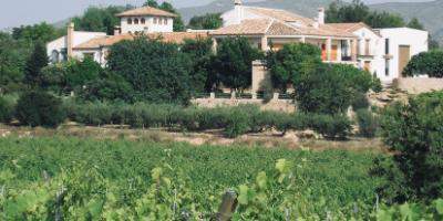 La Casa de las Vides Bodegas-Mañana entre viñedos en la Toscana valenciana-Morning in the vineyards in the Valencian Tuscany-Matí entre vinyes en la Toscana valenciana