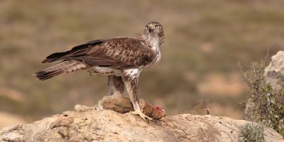 Birdwatching Spain-De turismo ornitológico por la Comunitat Valenciana. BONOVIAJE-Birdwatching tour in Valencia Region. BONOVIAJE-Turisme ornitológic per la Comunitat Valenciana. BONOVIATGE