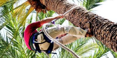 Huerto del Cura-Un paseo entre palmeras-A walk through the palm trees-Un passeig entre palmeres