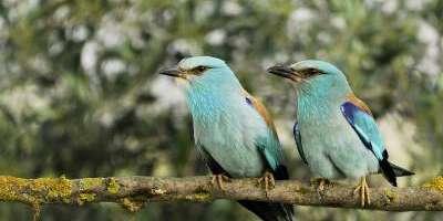 Avanzatour-Ruta ornitológica por el Palmeral de Elche-Birdwatching route in the Palmeral of Elche-Ruta ornitològica pel Palmerar d'Elx