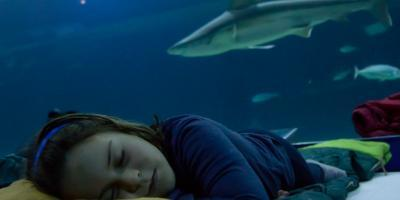OCEANOGRÀFIC VALENCIA-Dormir con tiburones-Sleeping with sharks-Dormir amb taurons