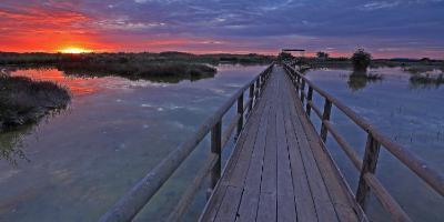 OXYTOURS-Los humedales de la Costa Blanca y sus joyas aladas-Birds of the wetlands of the Costa Blanca-Les aus dels aiguamolls de la Costa Blanca