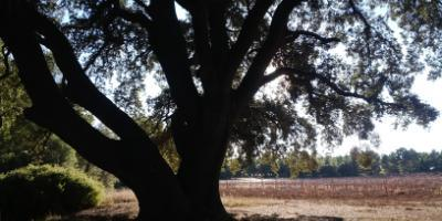 Actio Birding-Birds&Wines-Birds&Wines-Birds&Wines