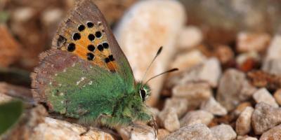 Birdwatching Spain-Observación de mariposas-Butterflies walks-Observació de papallones