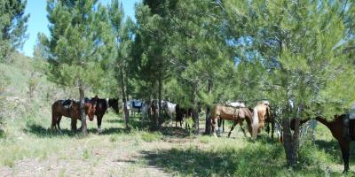 Field and Horse-Paseo por la sierra de Quatretonda: Bastión de la reconquista.-Walk through the Quatretonda mountains: Bastion of the reconquest.-Passeig per la serra de Quatretonda: Bastió de la reconquesta.