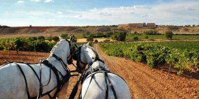Field and Horse-Paseo en carruaje por tierra de vinos-Carriage ride through wine country-Passeig en carruatge per terra de vins