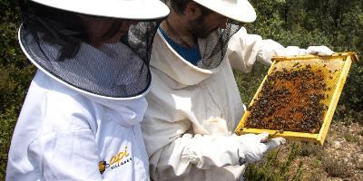Apivillores-Apivillores, turismo apícola-Apivillores, bee tourism-Apivillores, turisme apícola