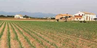 Entre alqueries i aigua: l'horta valenciana
