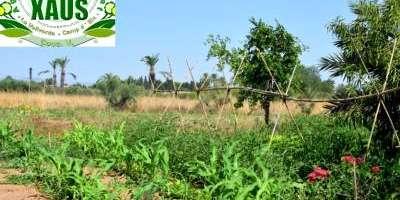 The natural rhythm: organic vegetable garden