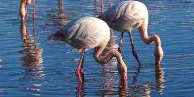 Les aus de l'aiguamoll