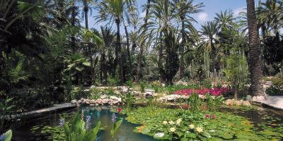 A walk through the palm trees