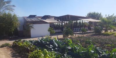 Visit to Valencian farmland and paella workshop