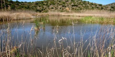 EducaVerd - GreenWalks-La Muntanyeta Verda, espectacular atalaya a la biodiversidad-La Muntanyeta Verda in Pego Oliva marsh-La Muntanyeta Verda, espectacular talaia a la biodiversitat