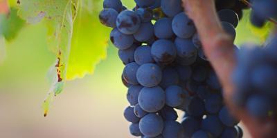 Visita guiada con cata de tres vinos